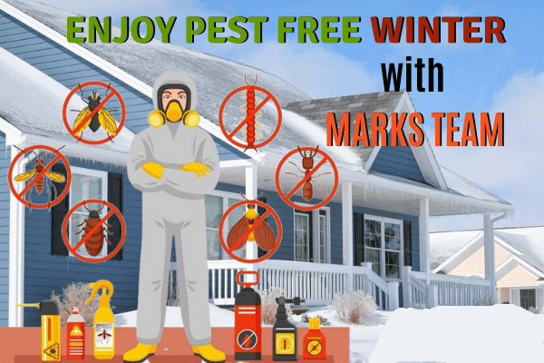 Keep Your Home Pest-Free This Winter
