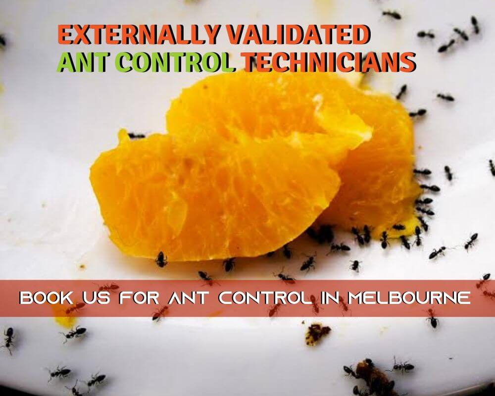 externally validated ant control Technicians melbourne