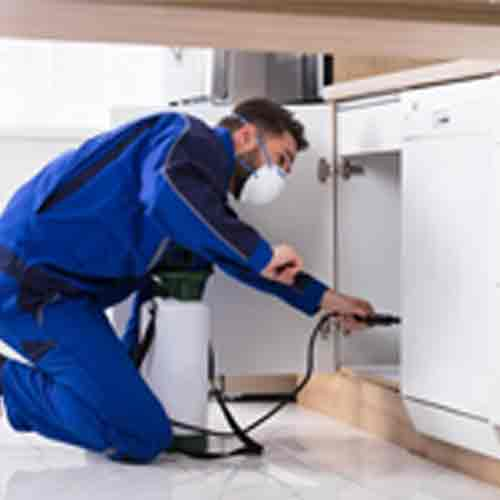 Pest Control Manor Lakes