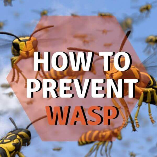 how to prevent wasp