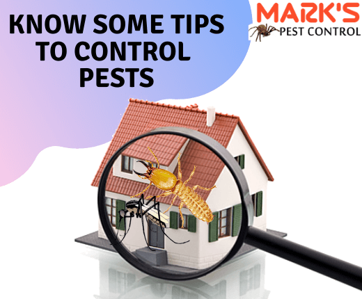 know tips to control pests-Marks Pest Control