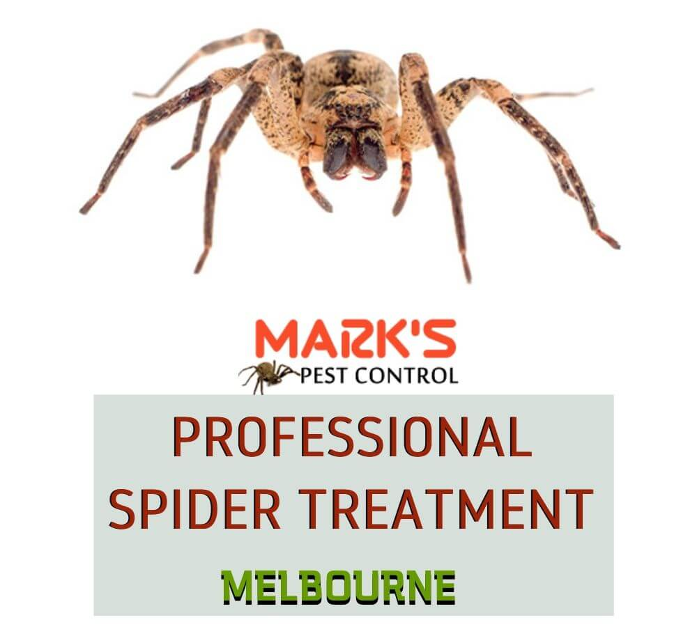 professional spider treatment melbourne (1)