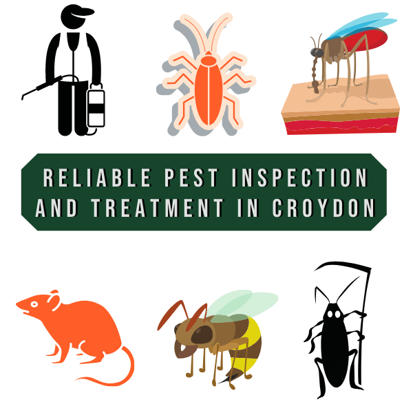 reliable Pest Inspection and Treatment in Croydon