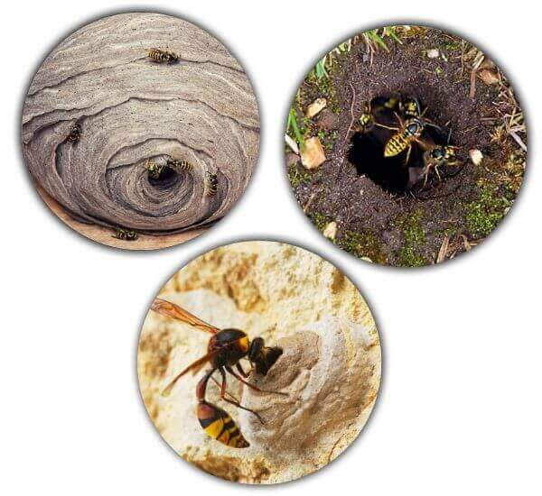type of wasp nest
