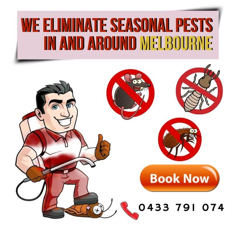 wE ELIMINATE Seasonal Pests in and Around Melbourne