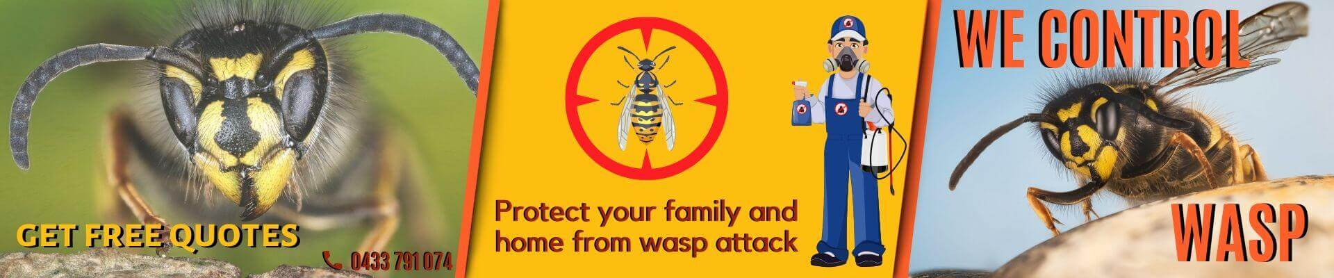 Wasp Removal Melbourne