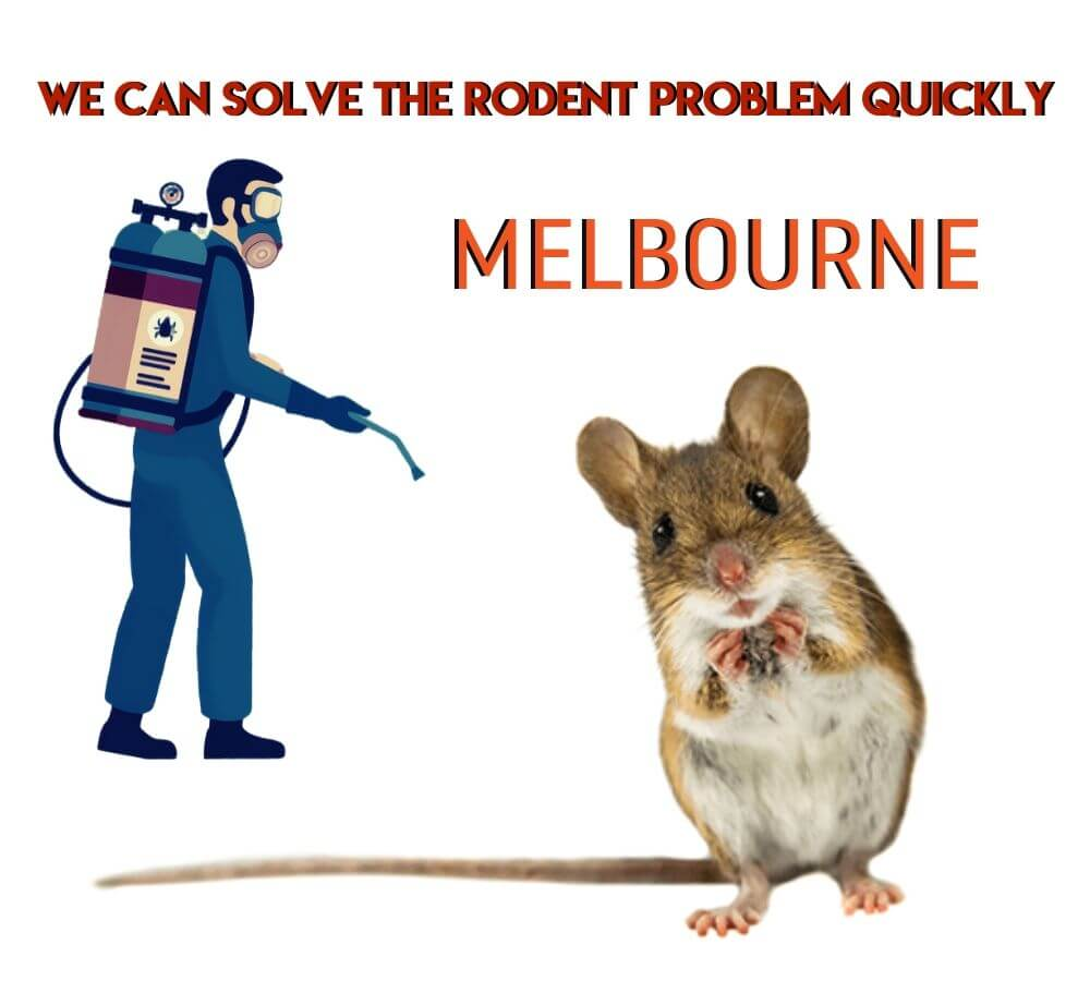 we can solve the rodent problem quickly
