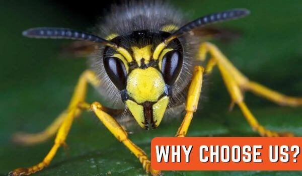 why choose marks wasp removal melbourne