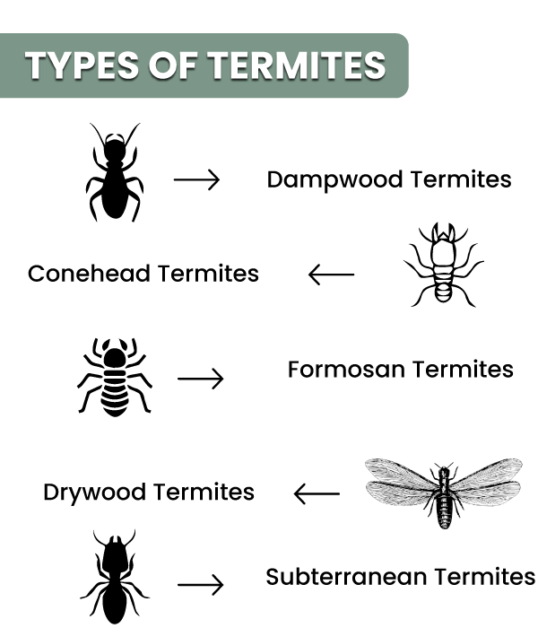 Termites It S A Family Occasion Who Knew Exacticide Bugsnomore Termite Pest Control Termite Treatment Termites