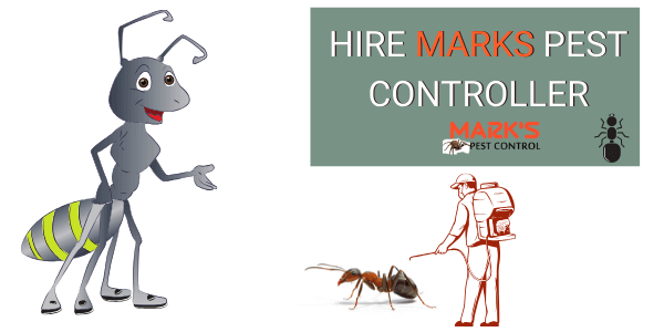 hire marks professional for ant control