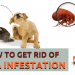 how to get rid of flea