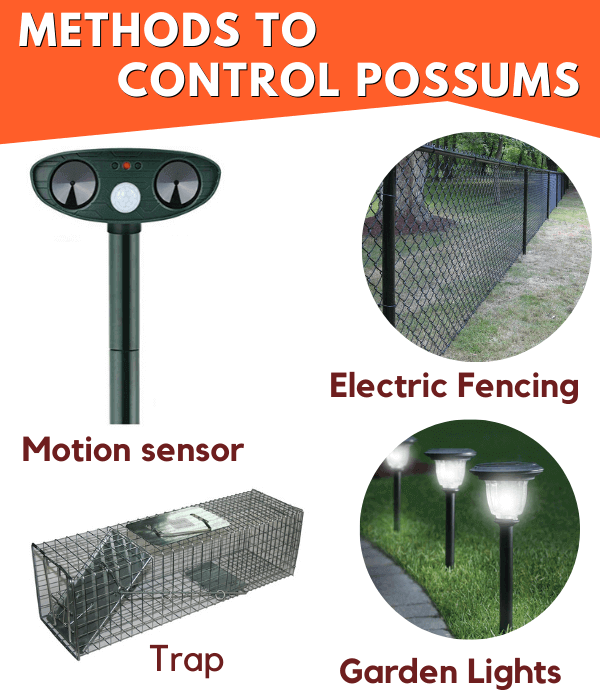 methods to control possums