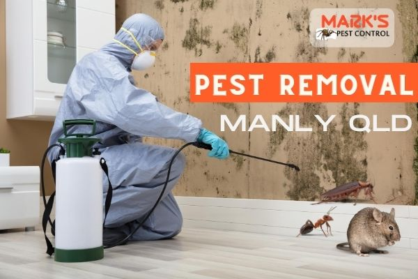 pest removal manly qld