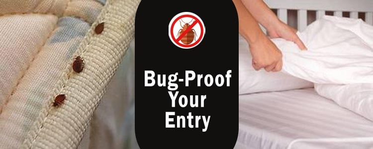 Bug-Proof Your Pantry