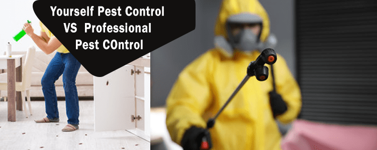 Yourself Pest Control VS Professional Pest Control