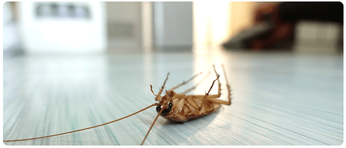 Step-By-Step Guide To Effective Cockroach Control in Melbourne
