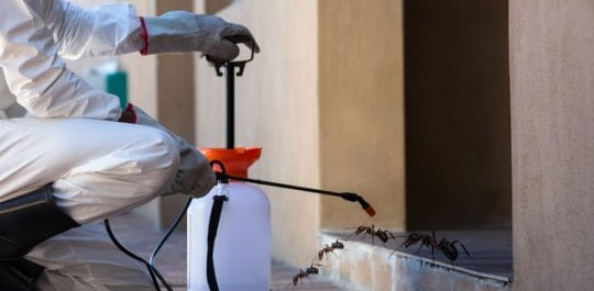 Ant Treatments Canberra