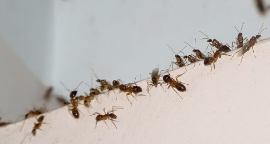 Best Ant Control Service