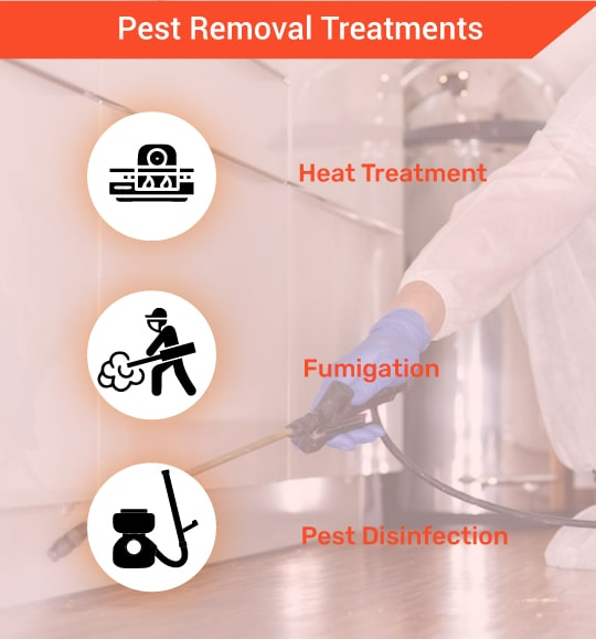 Pest Removal Treatments